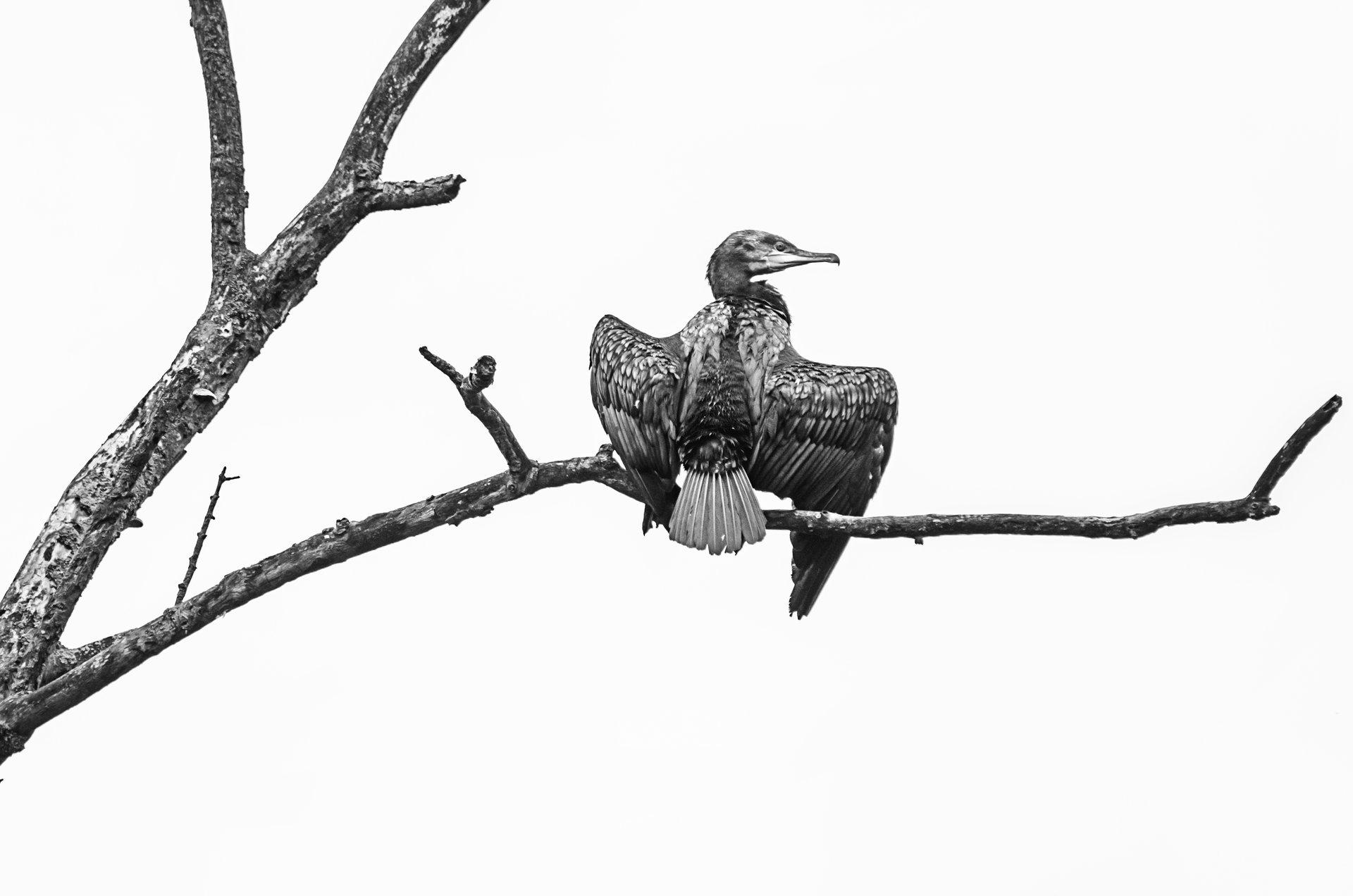 Photo in Wild life | Author desiignat | PHOTO FORUM