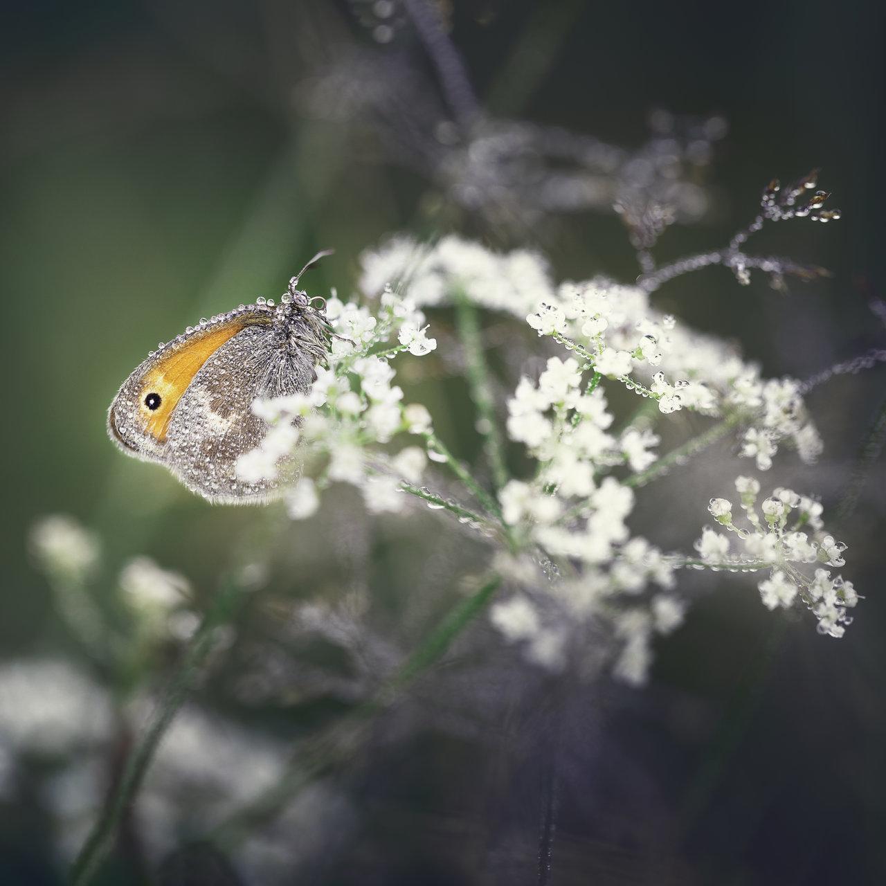 Photo in Macro | Author valniuk | PHOTO FORUM