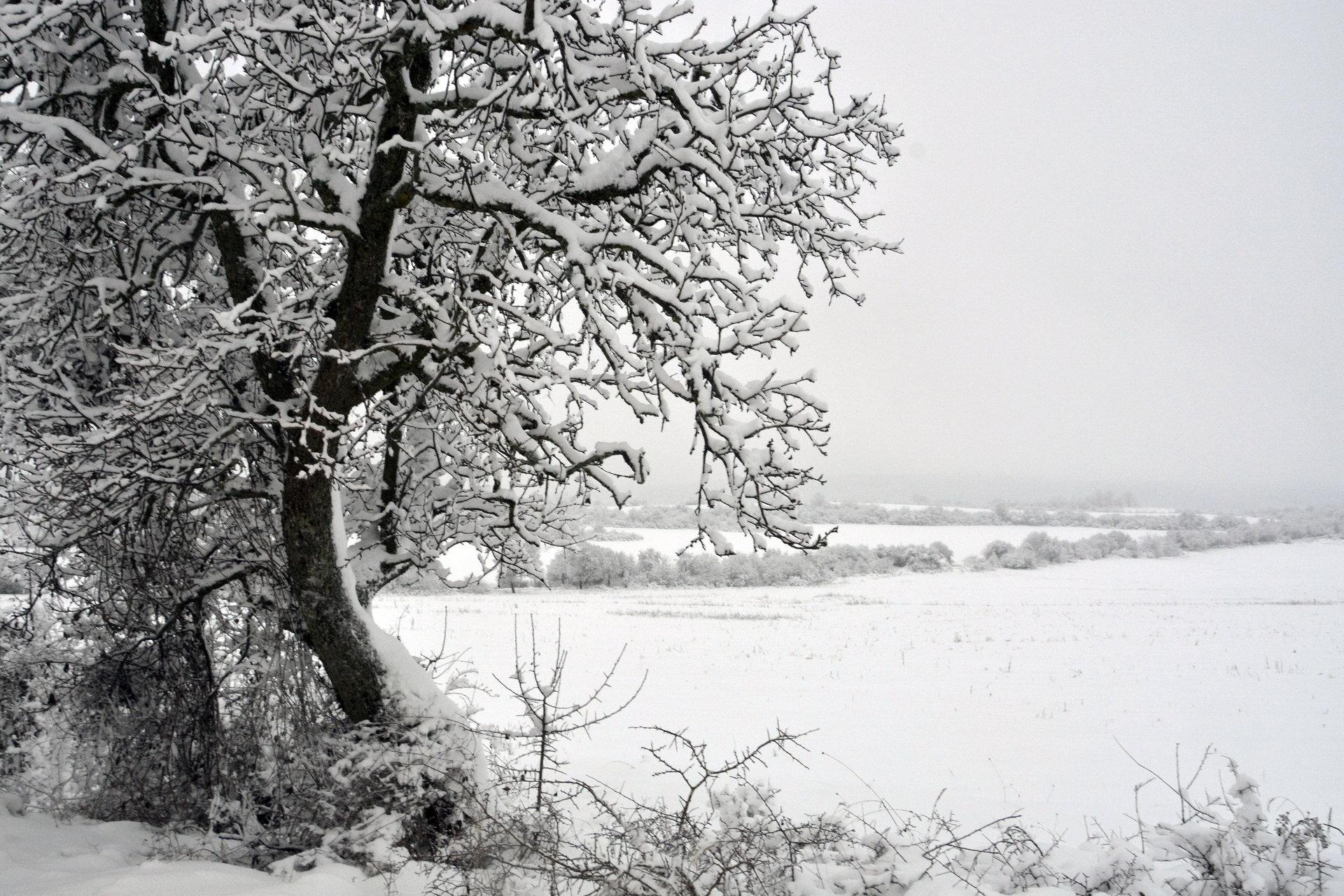 Зимно утро | Author shadow... | PHOTO FORUM
