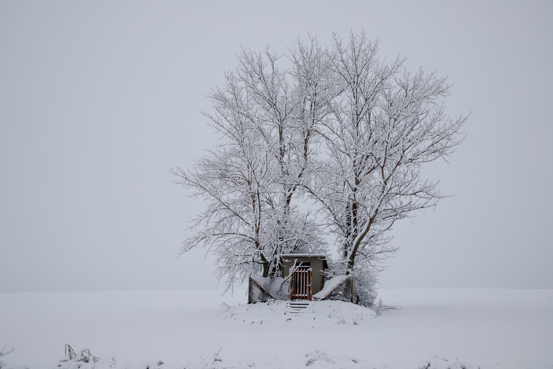 Зима | Author mjeinov | PHOTO FORUM