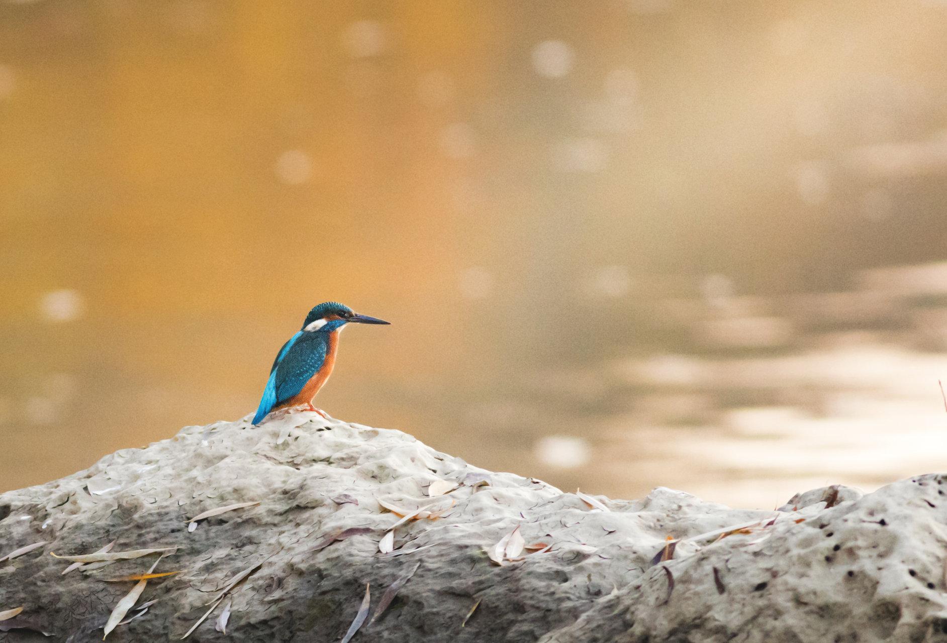 :) Земеродно рибарче   Author Djanid   PHOTO FORUM