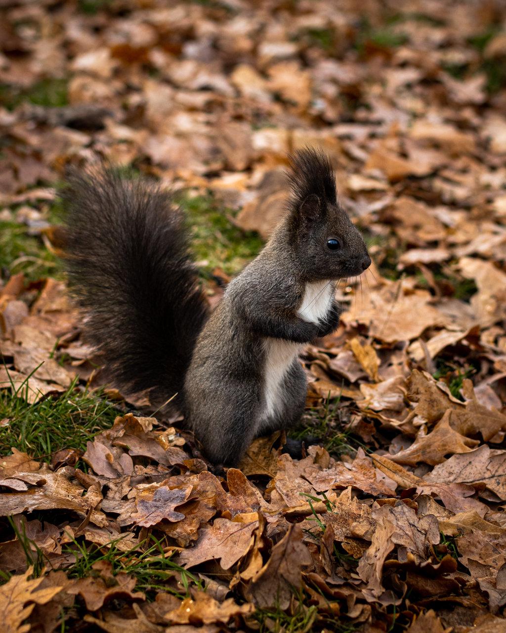 Photo in Wild life | Author Alexander Dolapchiev - redone | PHOTO FORUM