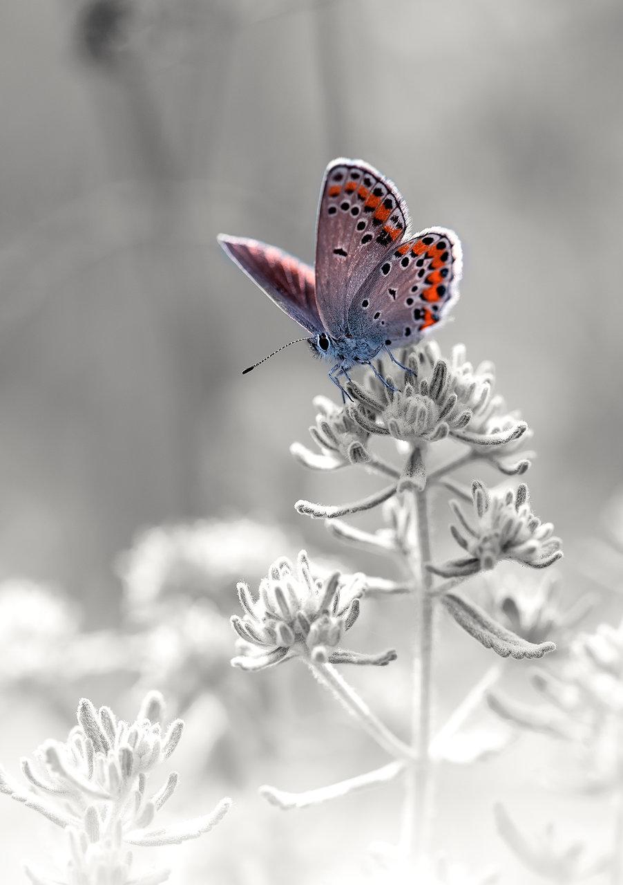 Ice queen.... | Author Nayden Bochev - NAKATA211 | PHOTO FORUM