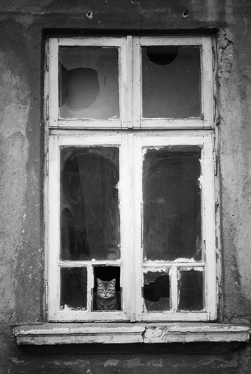 Photo in Windows | Author Mariela Atanasova - ellM | PHOTO FORUM