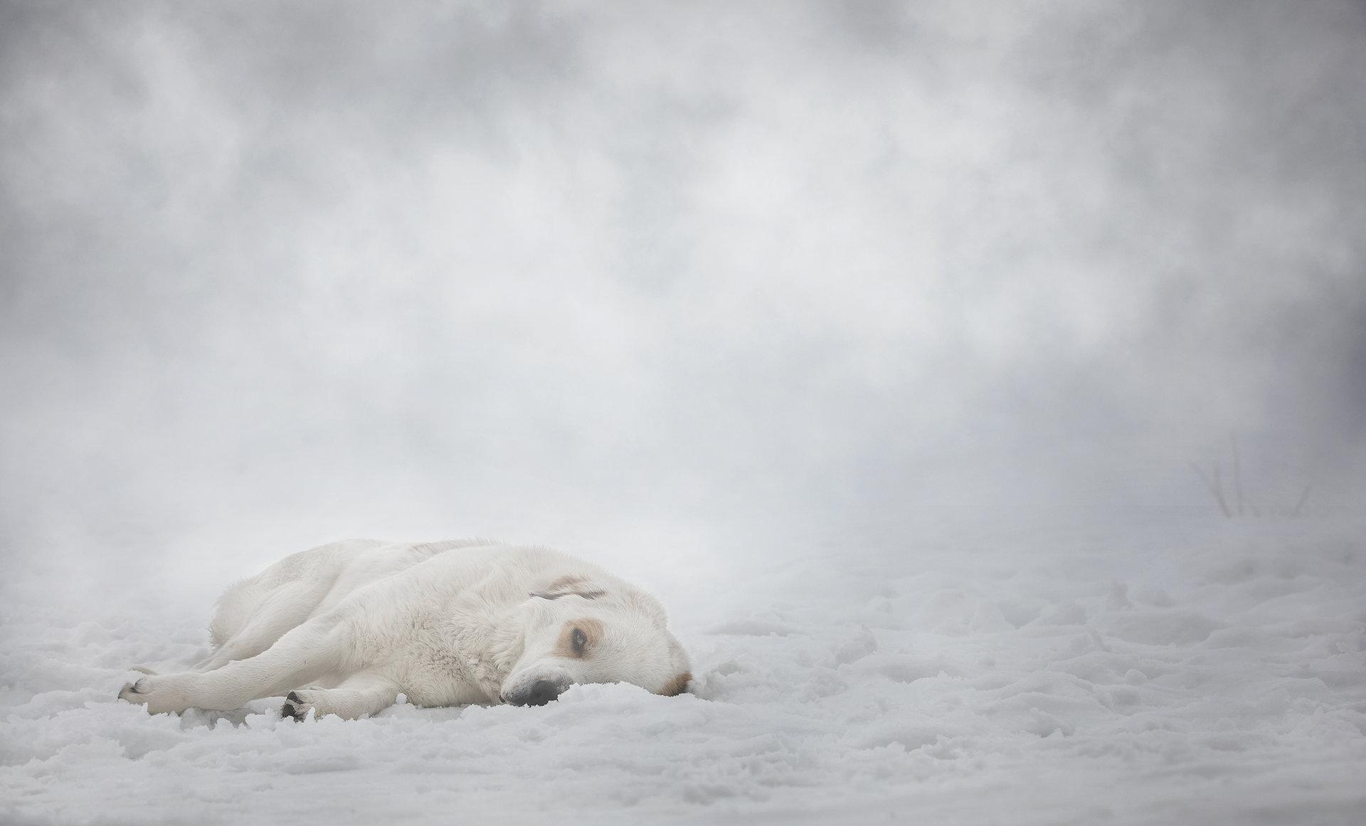 Умореният ветеран 2 | Author Vladimir Karamazov - Vlado79 | PHOTO FORUM