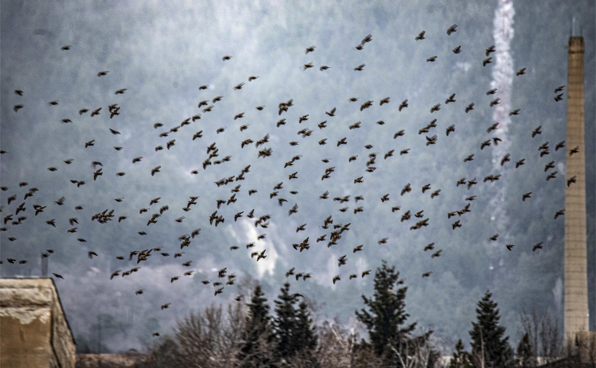 Птици | Author Евгени В - evega | PHOTO FORUM