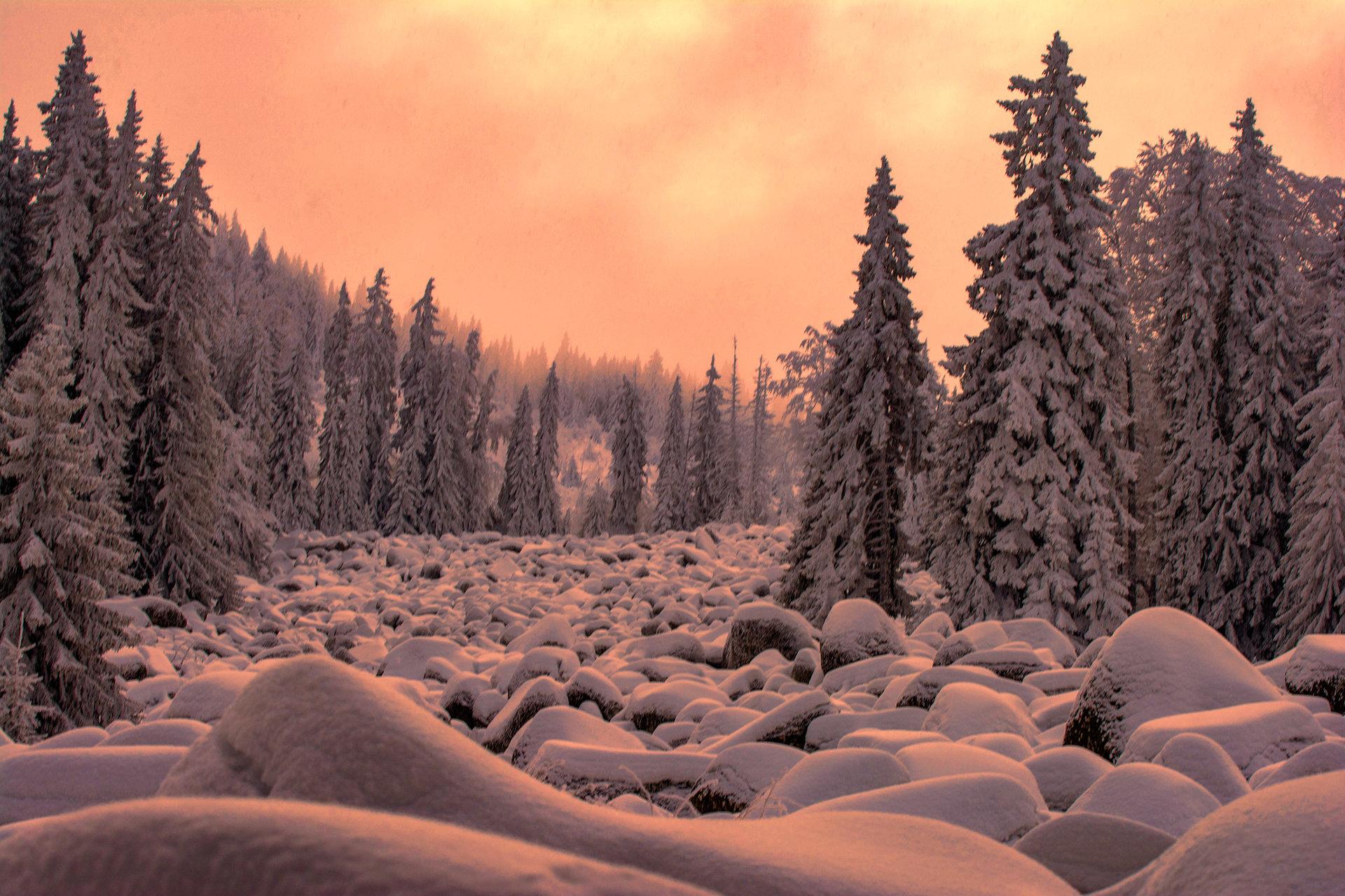 Зимна приказка | Author TEODORA IVANOVA - dorascal18 | PHOTO FORUM