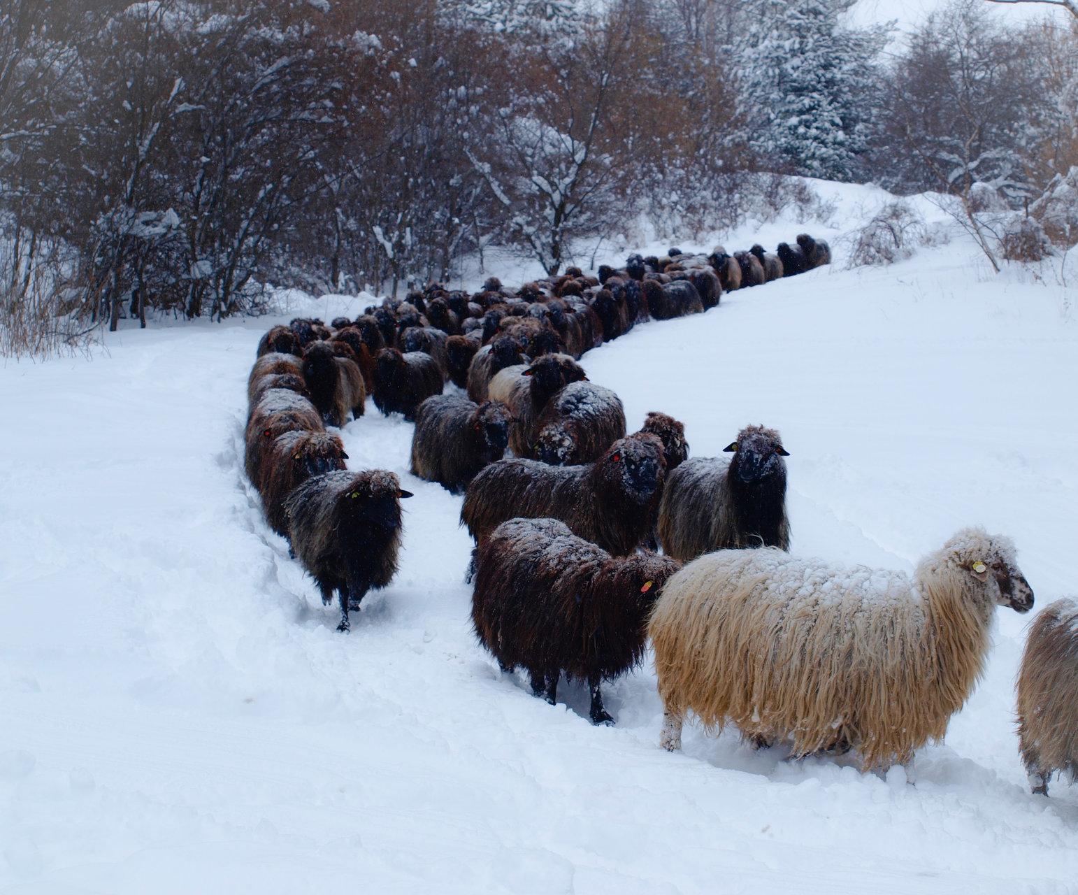 До Бистрица. | Author Тути | PHOTO FORUM