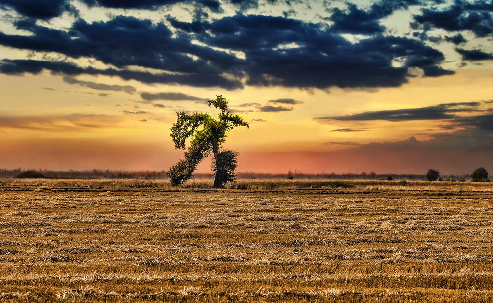 Бягащото дърво | Author Vasil Nanev - vnanev | PHOTO FORUM