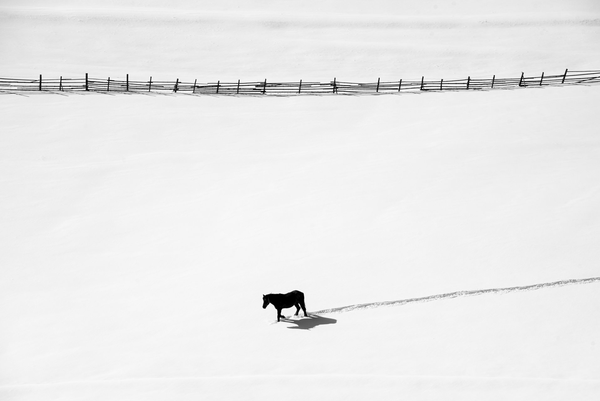 Зимна разходка | Author non40 | PHOTO FORUM