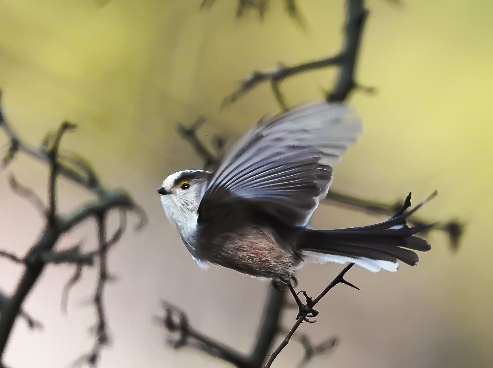 Photo in Wild life | Author Krasimir Georgiev - krassi04 | PHOTO FORUM