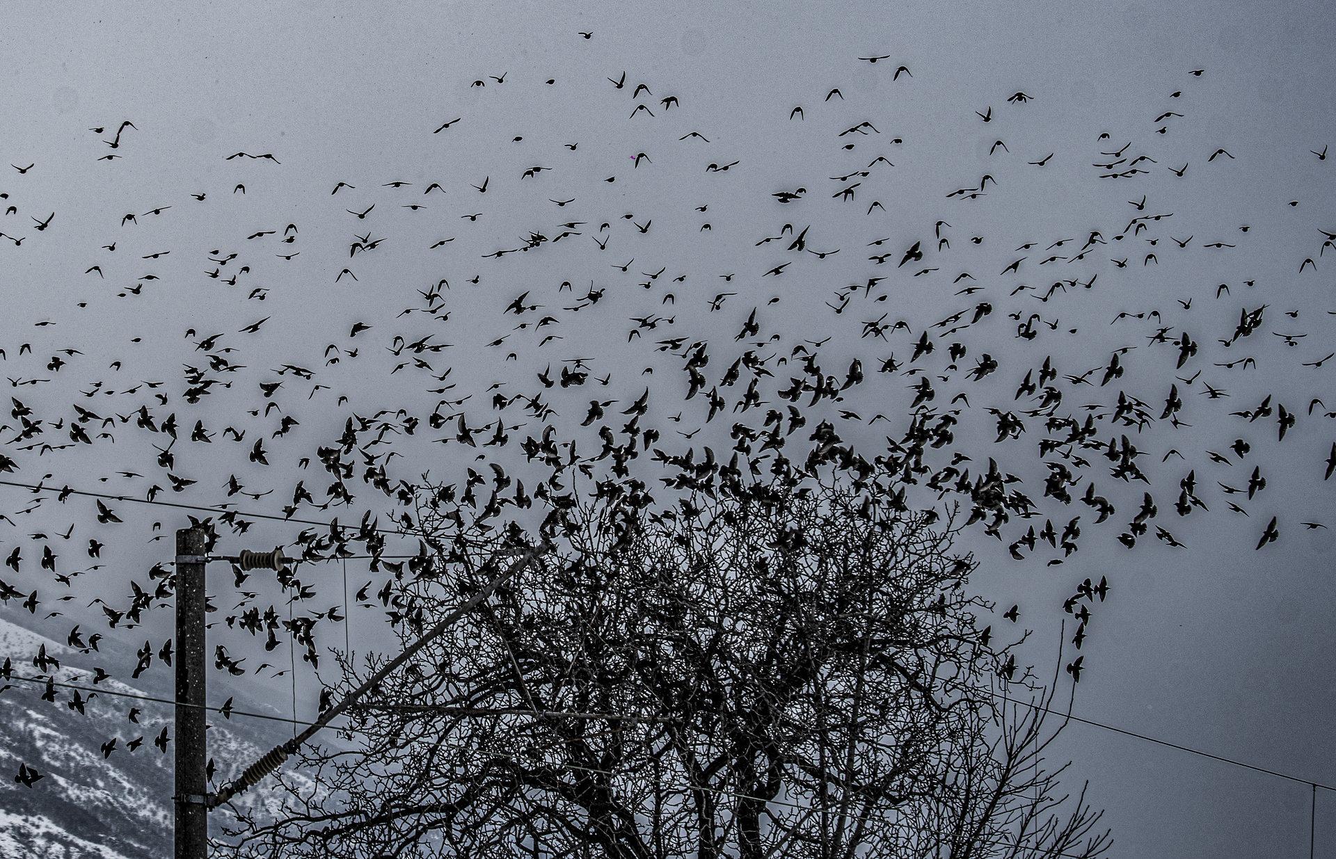 Птиците | Author Евгени В - evega | PHOTO FORUM