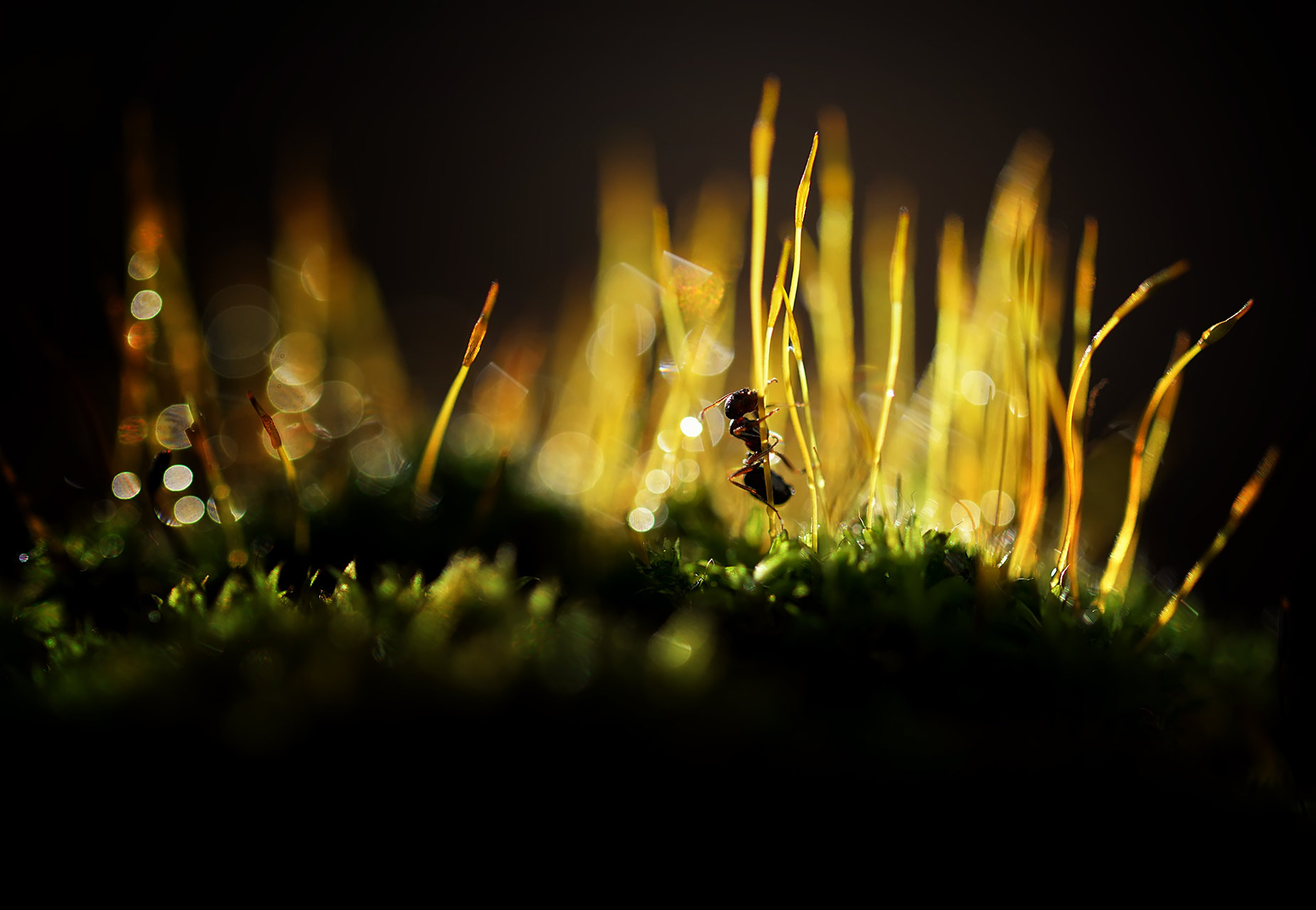 Photo in Macro | Author XristinaRuseva | PHOTO FORUM