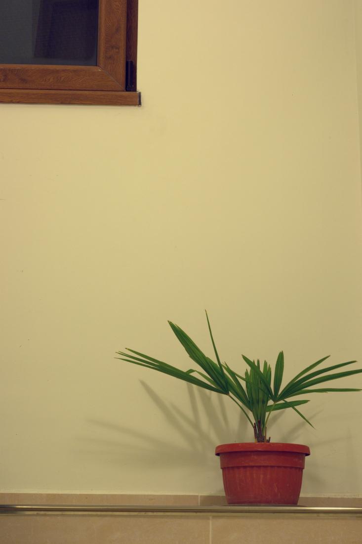 Композиция с палма   Author idivanov   PHOTO FORUM