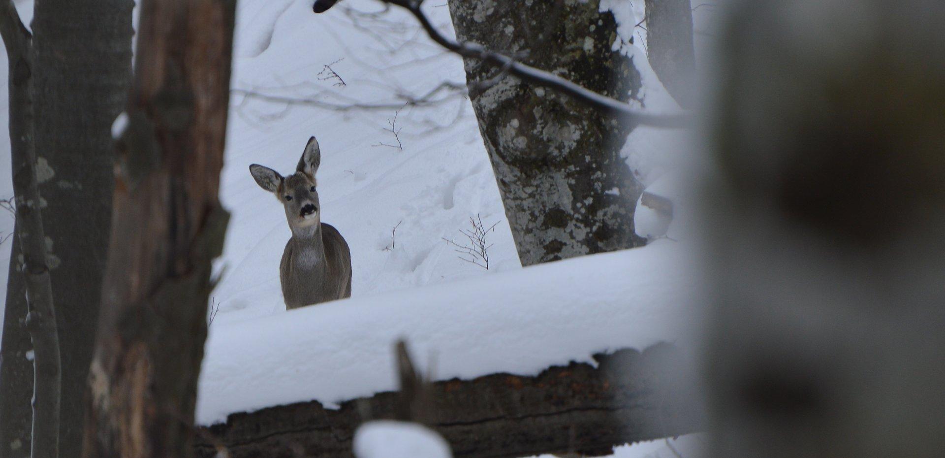 Photo in Wild life | Author rogath | PHOTO FORUM