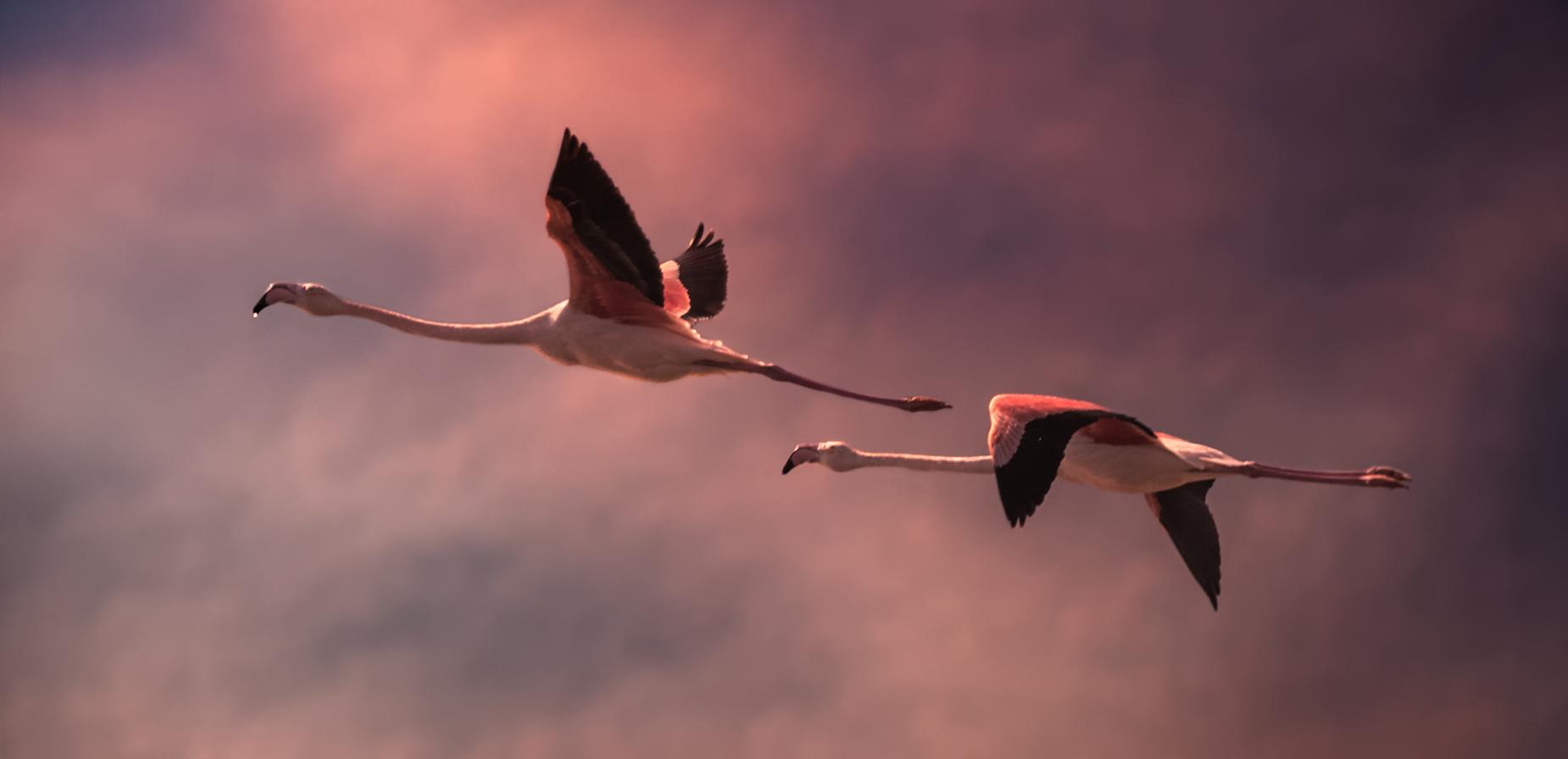 Photo in Wild life | Author kdlaz | PHOTO FORUM
