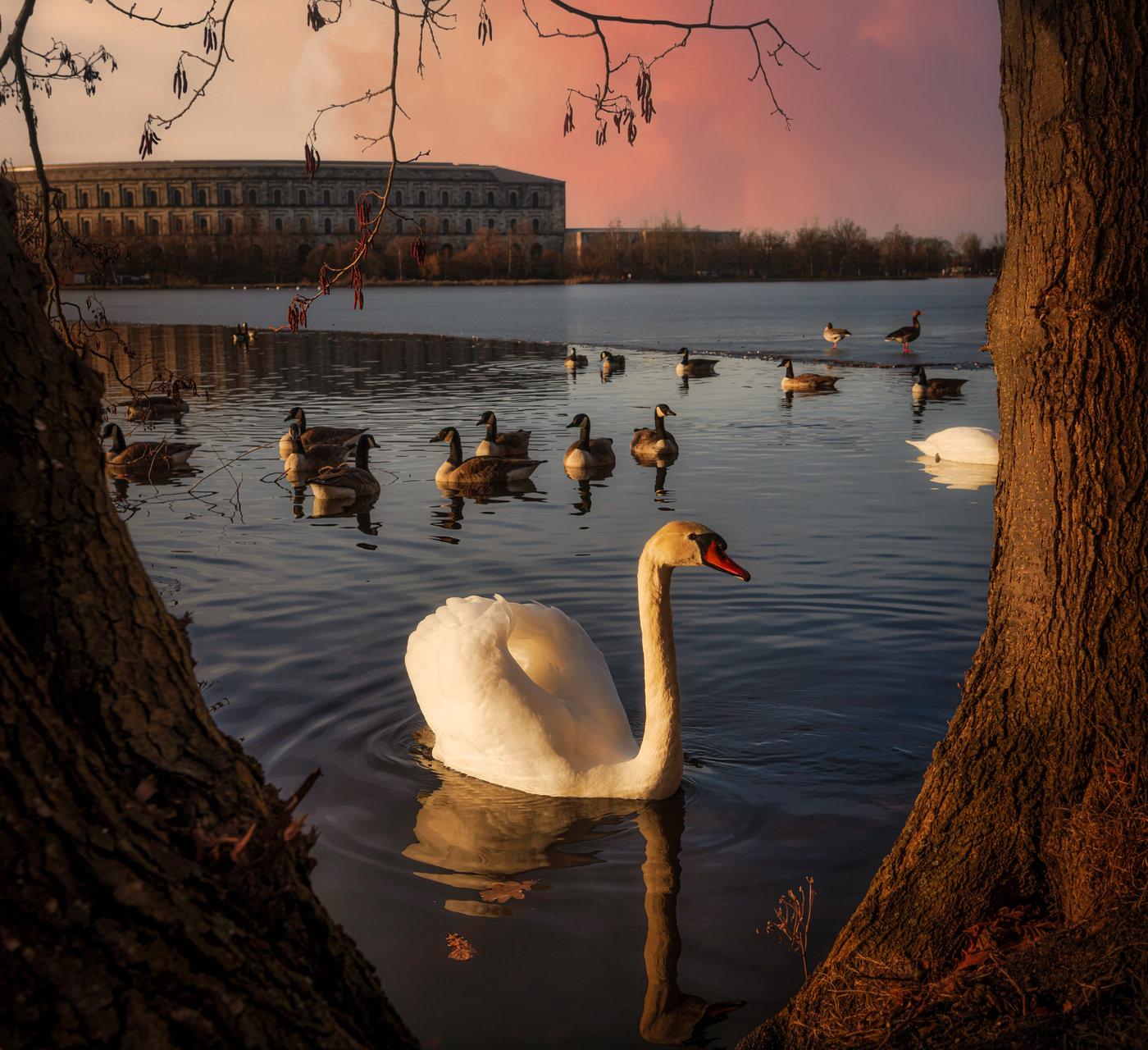 Лебед | Author Zavaydinov_Photography | PHOTO FORUM