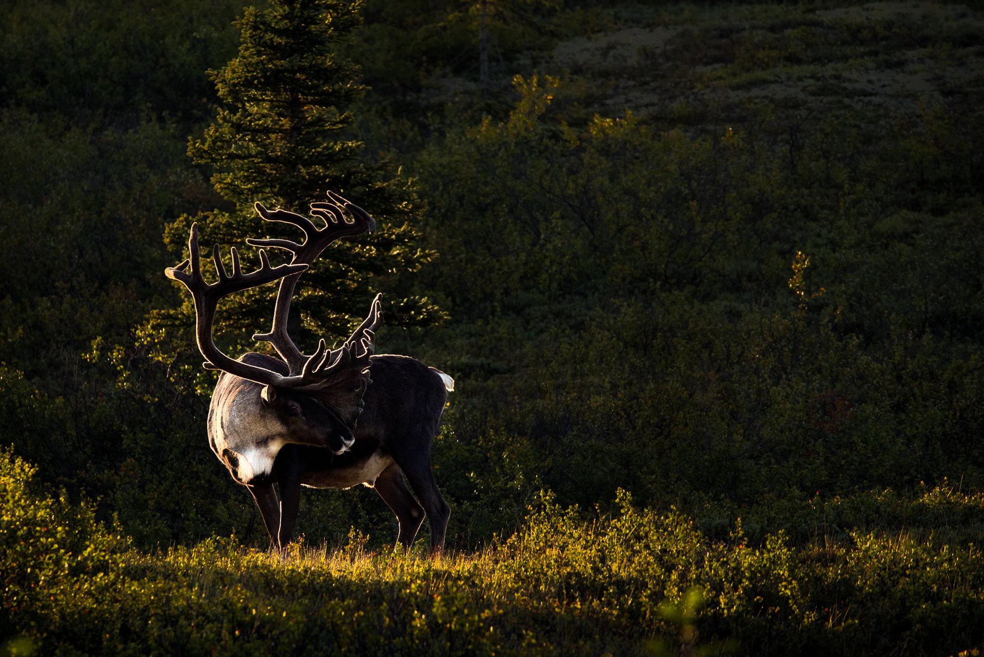 Alaska   Author marioten7   PHOTO FORUM