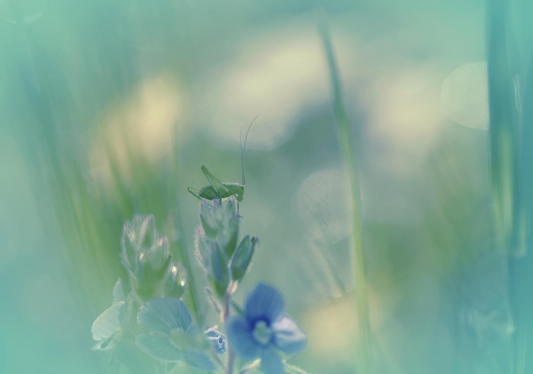 Photo in Macro | Author XristinaRuseva | PHOTO FORUM