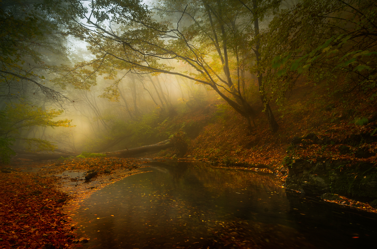 Есенна соната | Author sandart | PHOTO FORUM