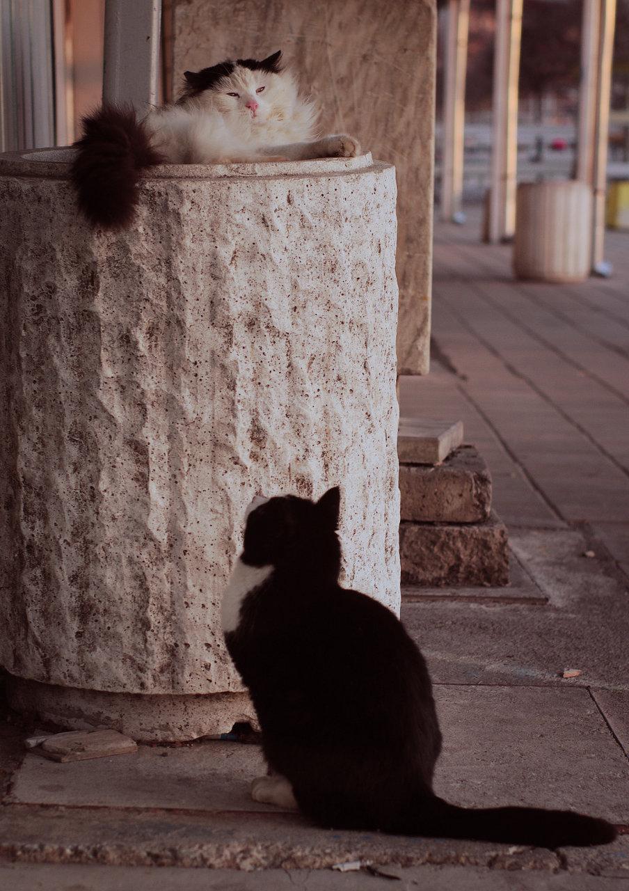 Photo in Street   Author ник_п-в   PHOTO FORUM
