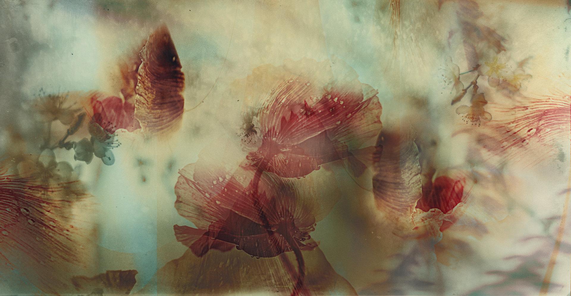 Photo in Abstract | Author Десислава Игнатова - desiignat | PHOTO FORUM