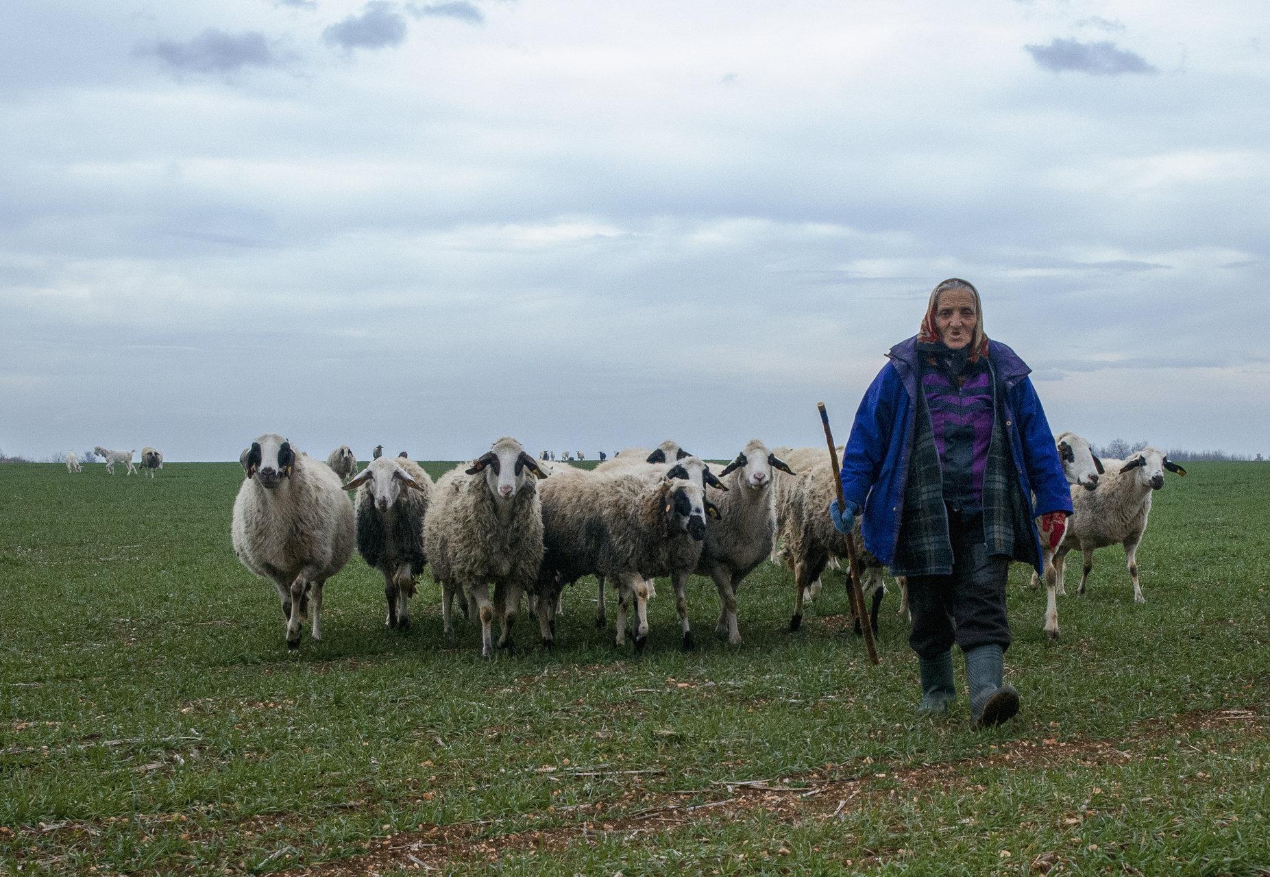 овчарката   Author Mariana Kirkova - haberlea_rhodopensis   PHOTO FORUM