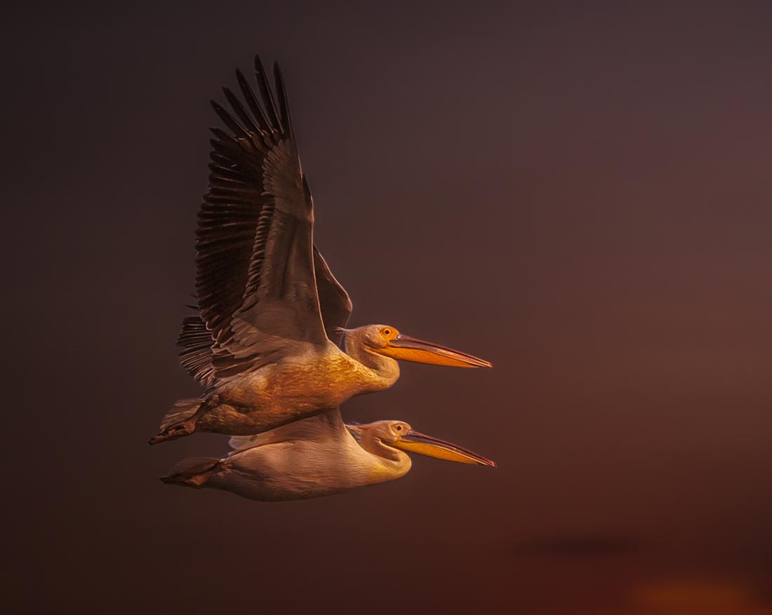 Photo in Wild life | Author Красимир Лазаров - kdlaz | PHOTO FORUM