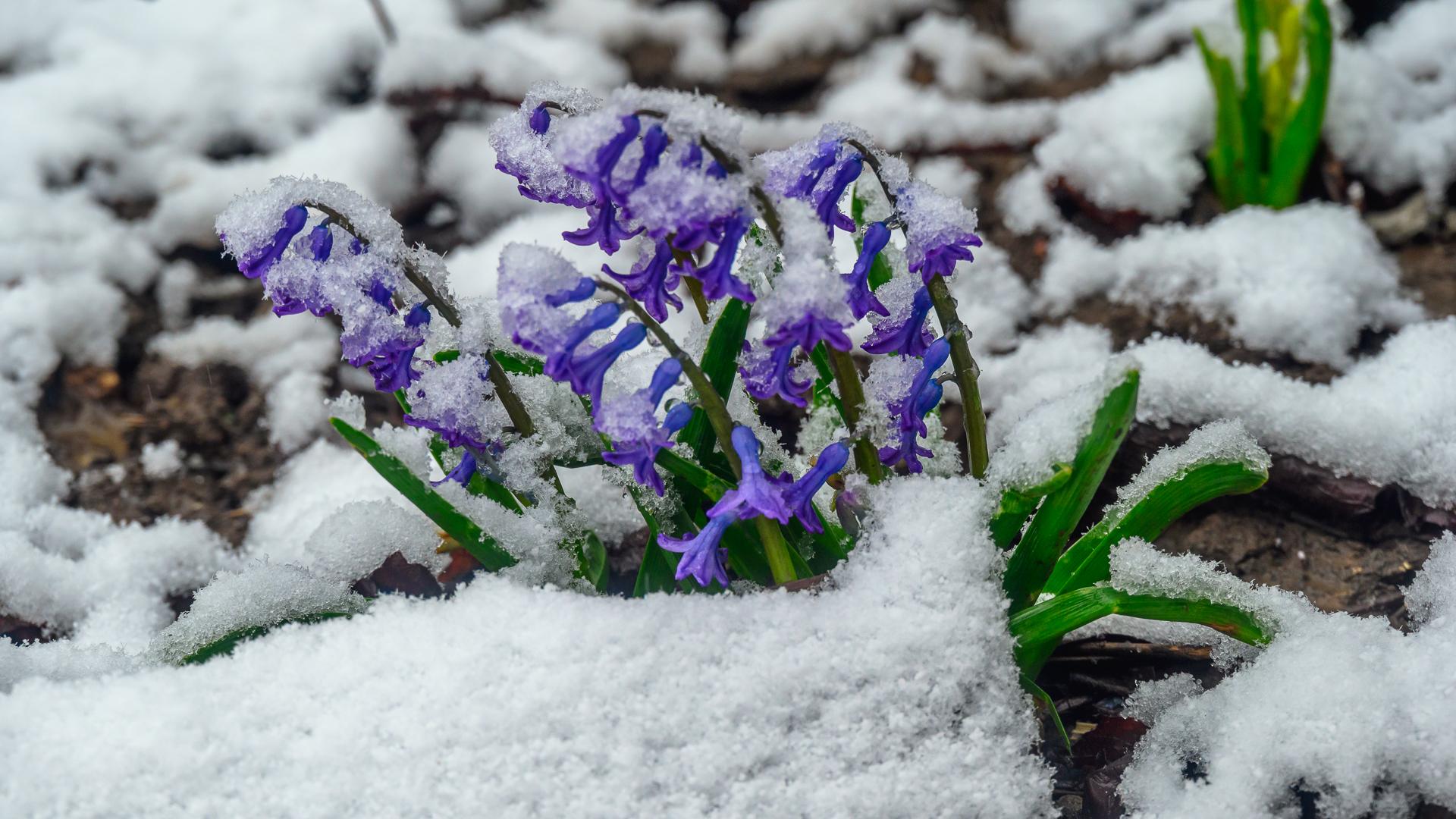 Снежко затрупа всичко навън | Author Milen Mladenov - resco | PHOTO FORUM