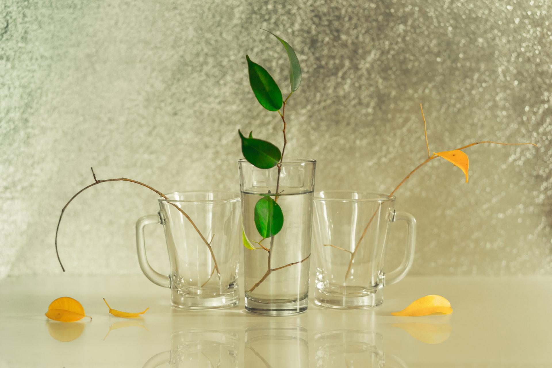 Чаша вода | Author Lyubomir  Nikolov - Lyubomir.Nikolov | PHOTO FORUM