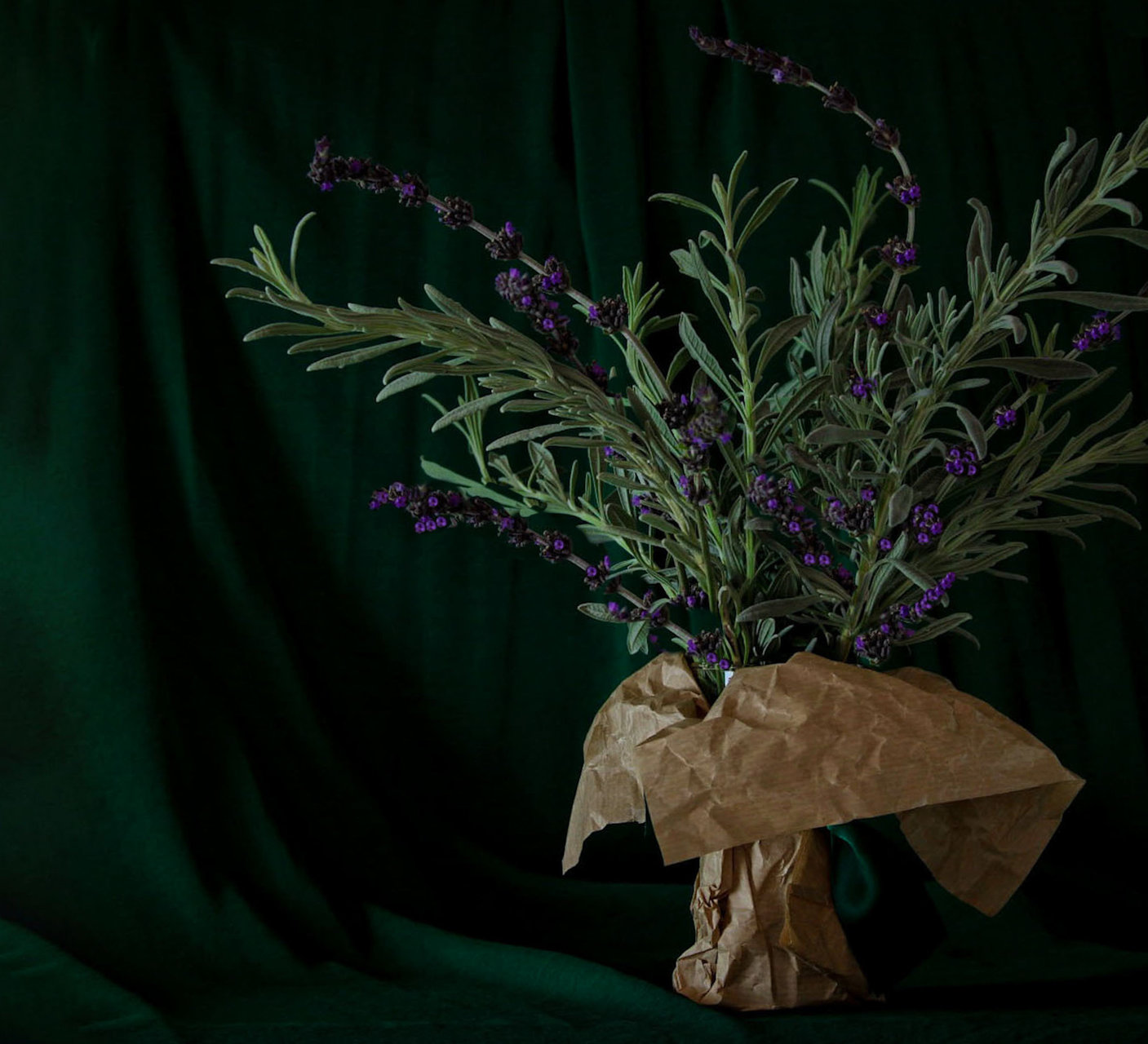 Lavender | Author Christiana Yonkova - christa_foodpoetry | PHOTO FORUM