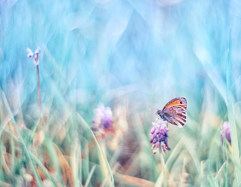 Photo in Macro | Author Nayden Bochev - NAKATA211 | PHOTO FORUM