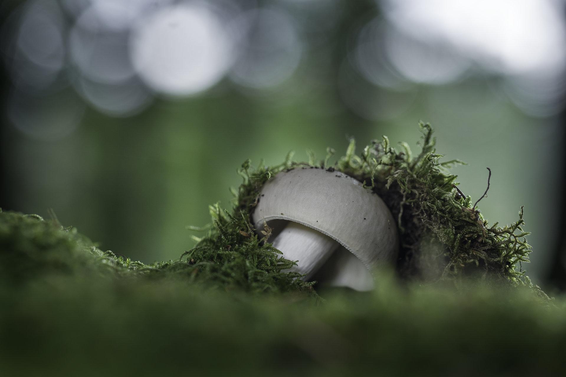 Photo in Macro | Author Valentin Ivanov - valniuk | PHOTO FORUM