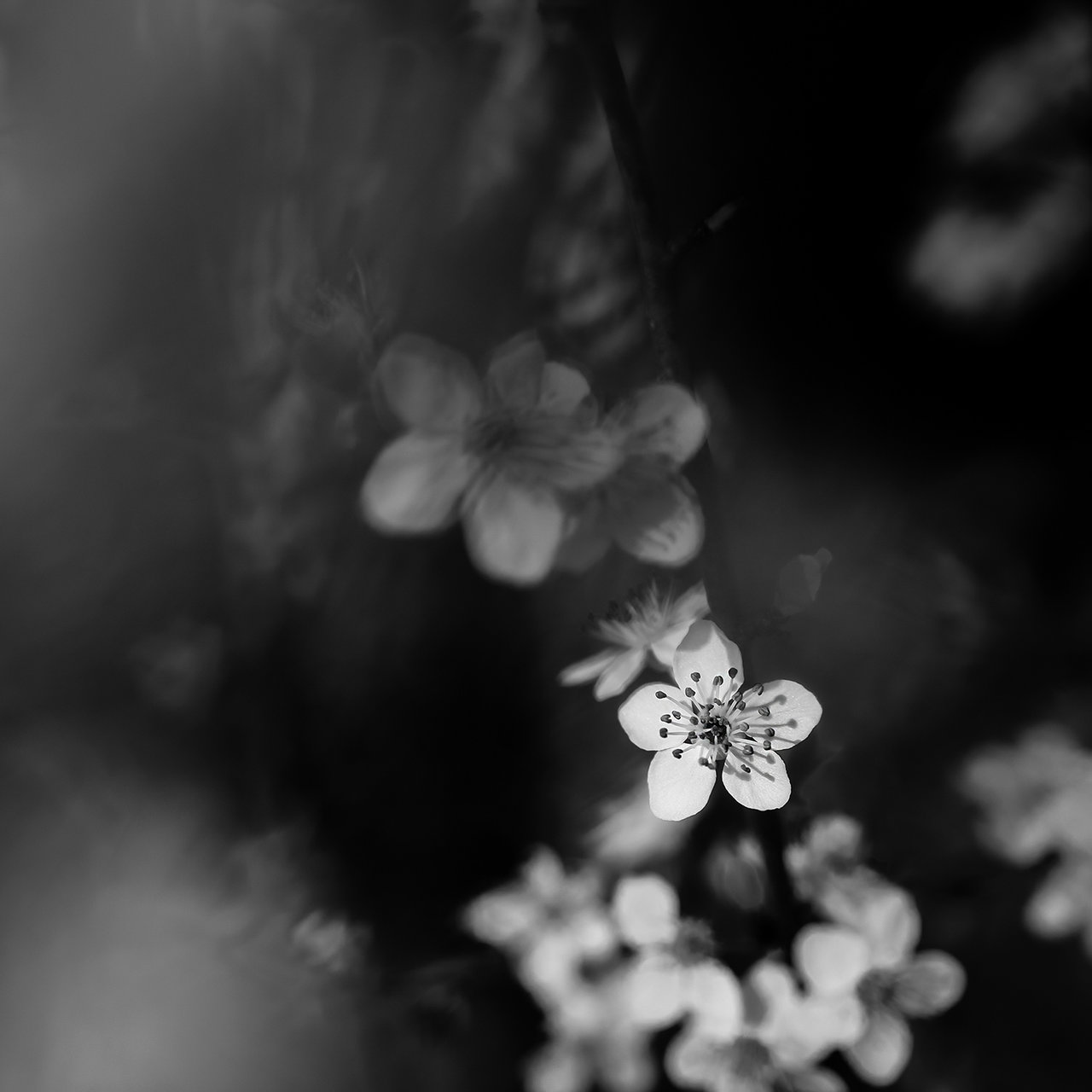 Spring Nocturne | Author Hristo Stefanov - ico10 | PHOTO FORUM