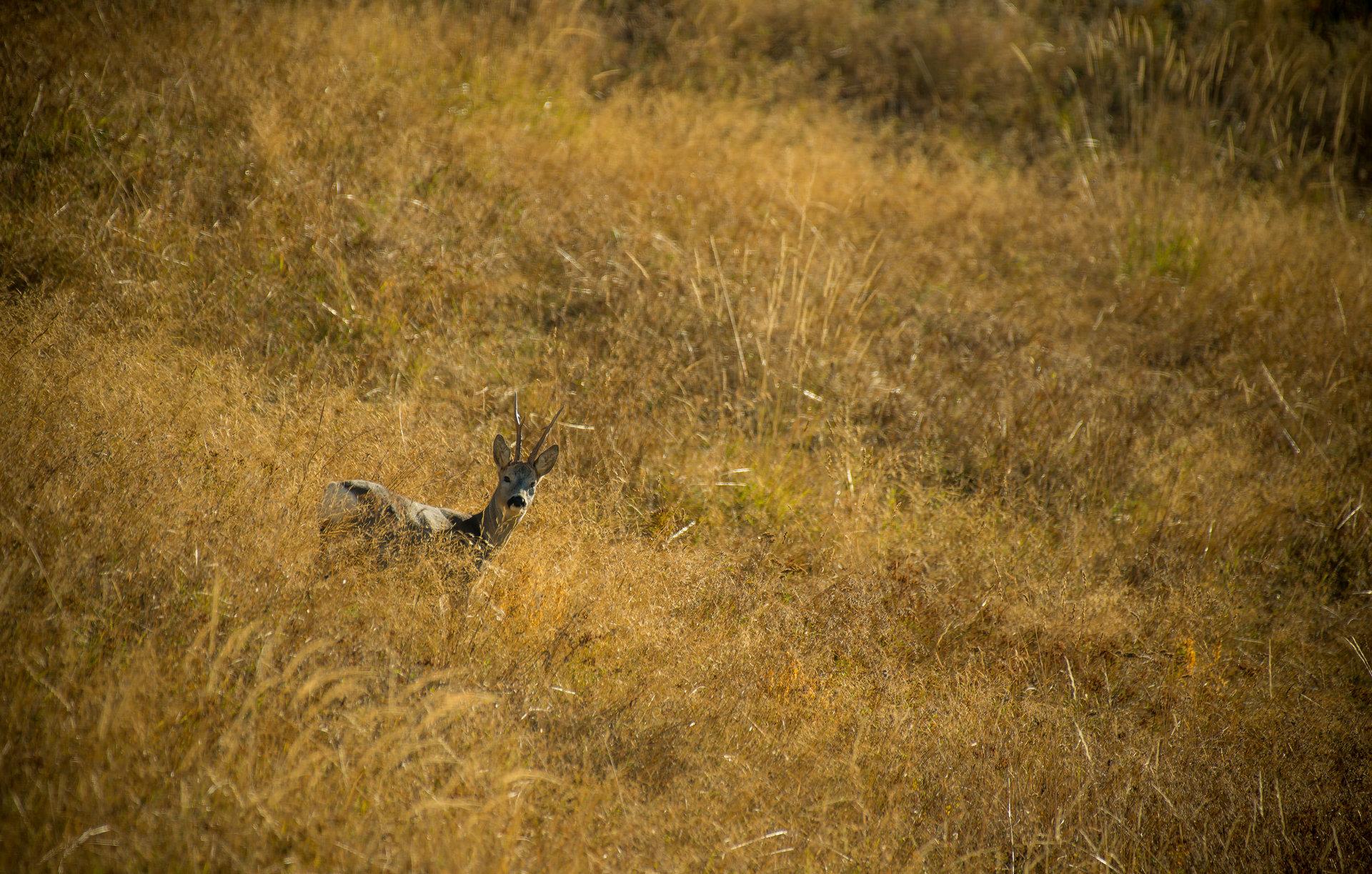 Photo in Wild life | Author Tihomir Petkov - Tihuana | PHOTO FORUM