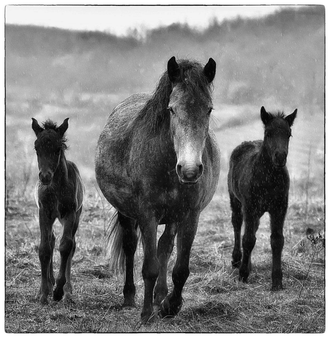 Photo in Everything else | Author ivan barov - kolmik | PHOTO FORUM
