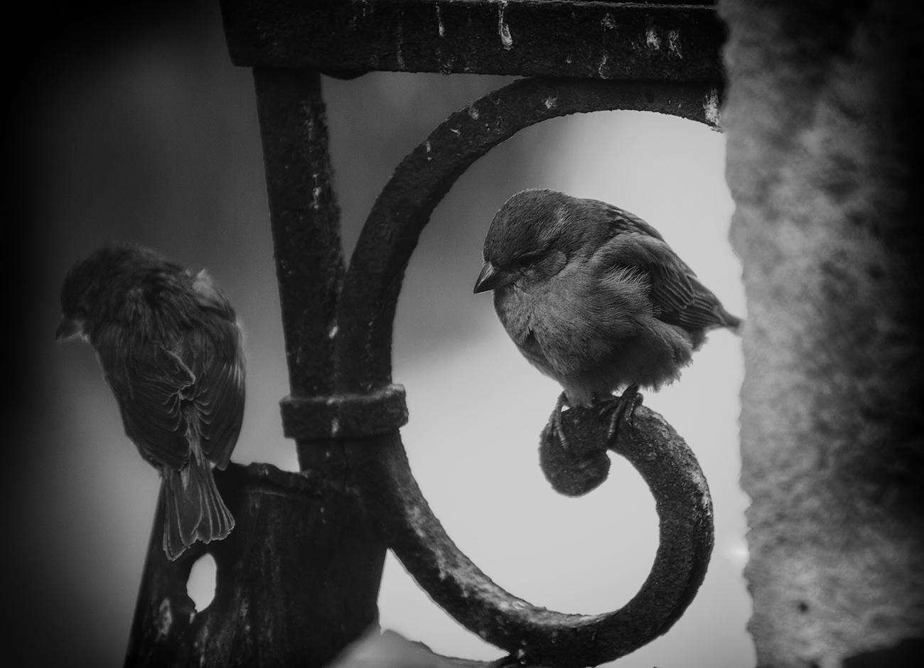 Photo in Wild life | Author Богдан Стойко - stb | PHOTO FORUM