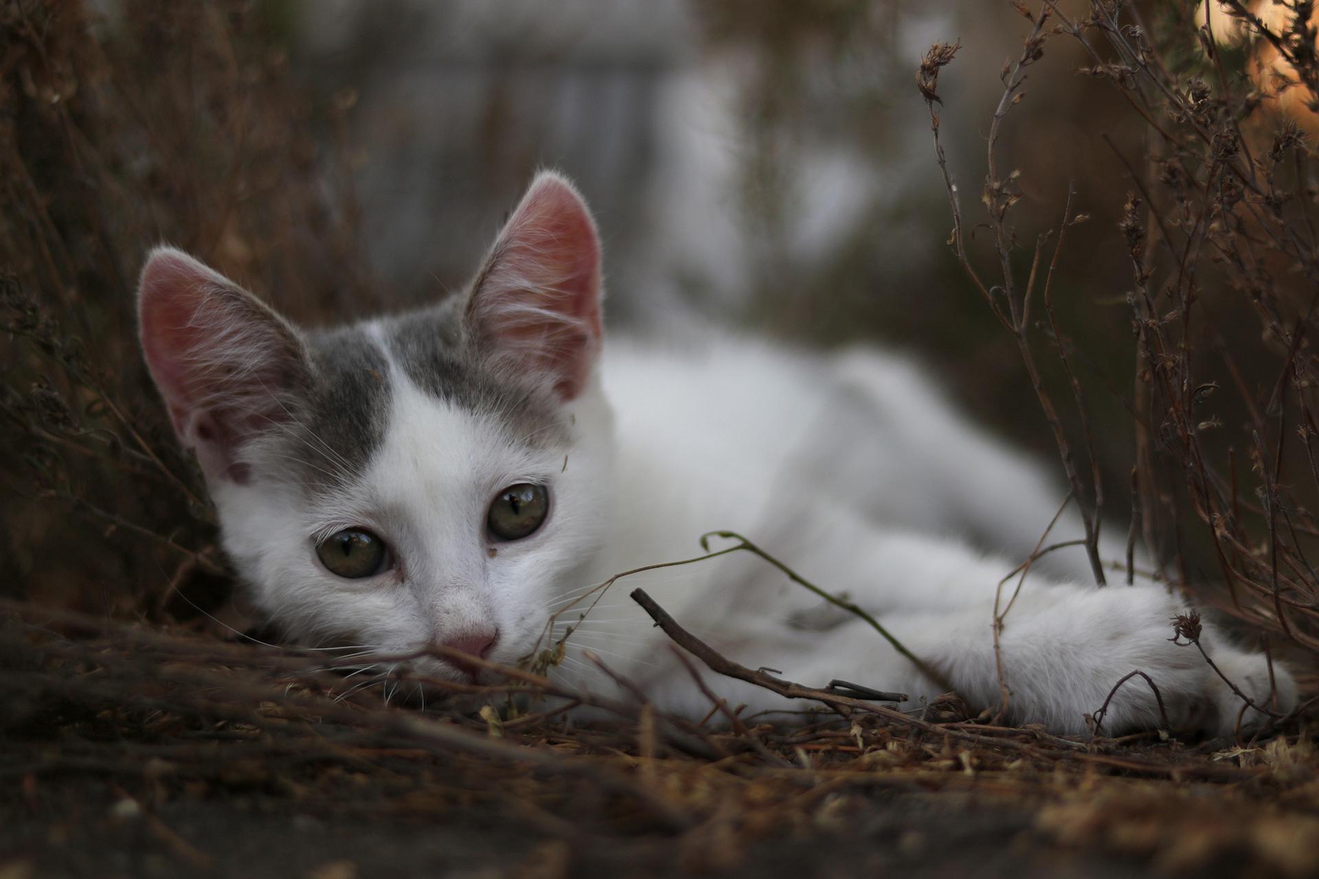 Photo in Pets | Author   - fragranse | PHOTO FORUM