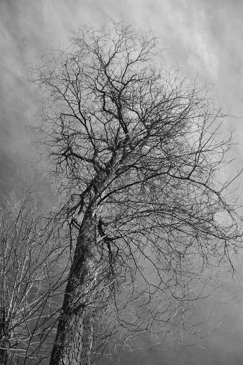 Photo in Low point of view | Author Verginia Atanasova - verguca | PHOTO FORUM