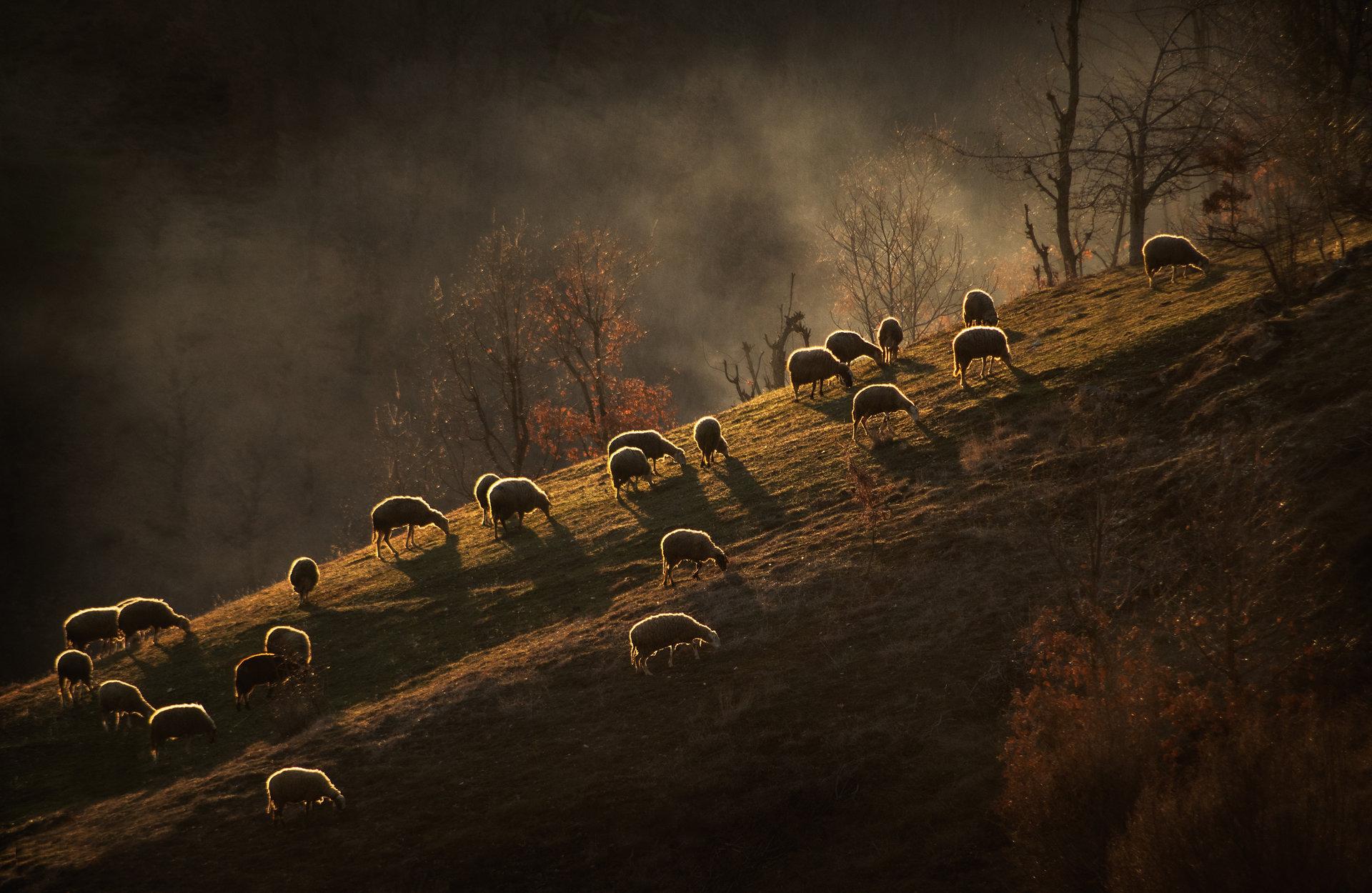 В края на деня някъде там в Родопа планина...   Author Nadezhda Raycheva - sunnyhope   PHOTO FORUM