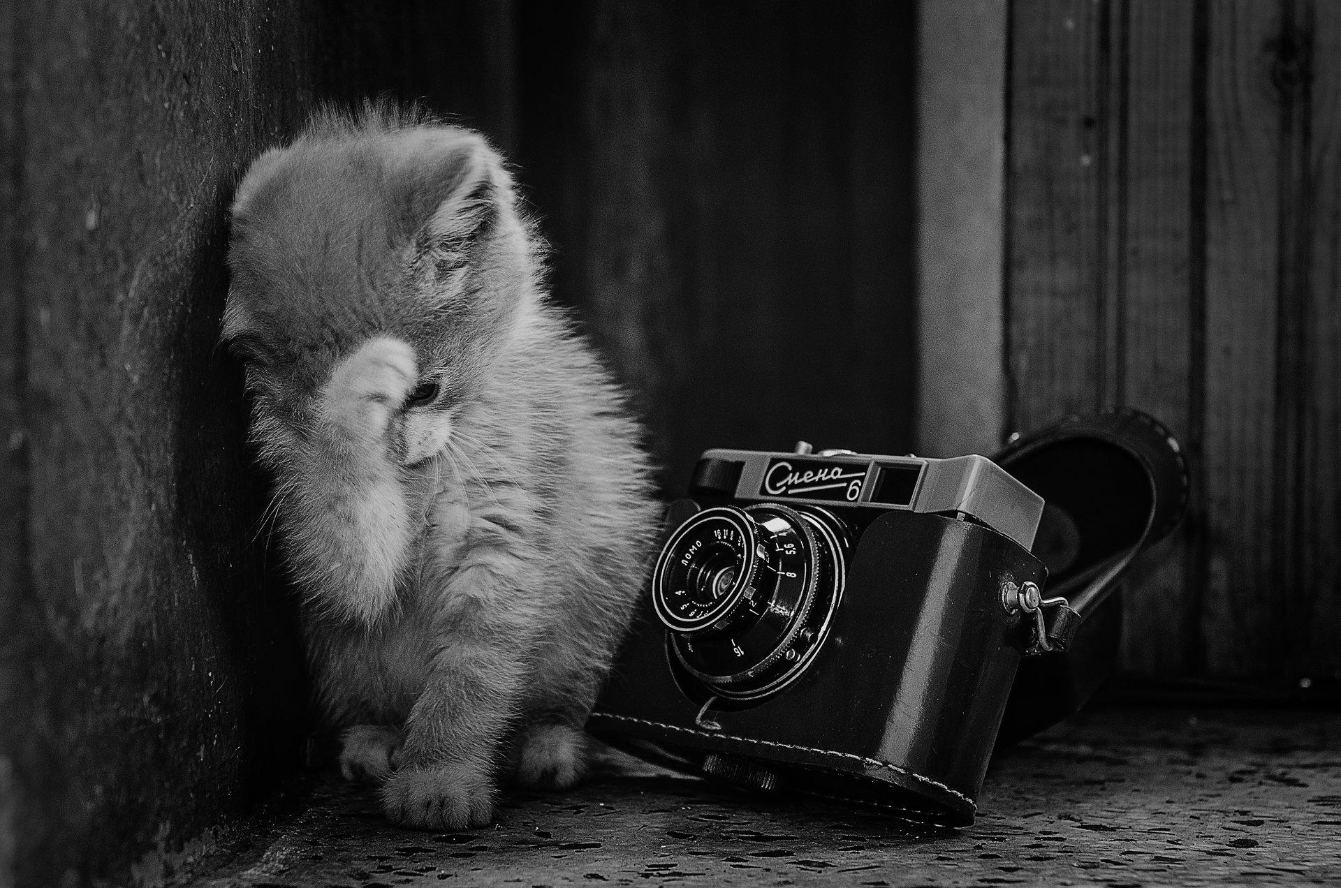 Срамежливко | Author Anton Dangov - PhoTONy | PHOTO FORUM