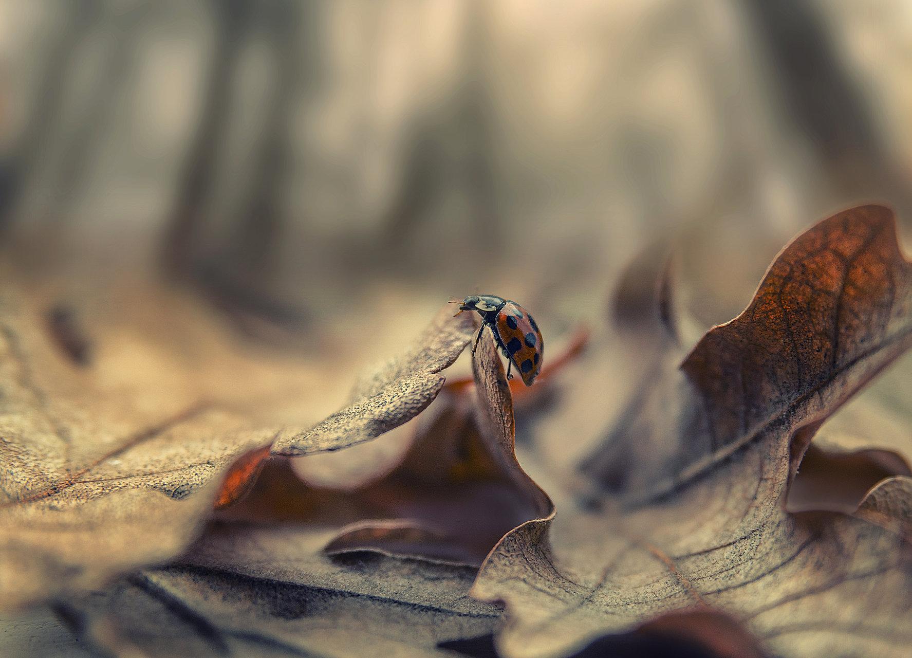 Тя - калинката | Author Anton Dangov - PhoTONy | PHOTO FORUM