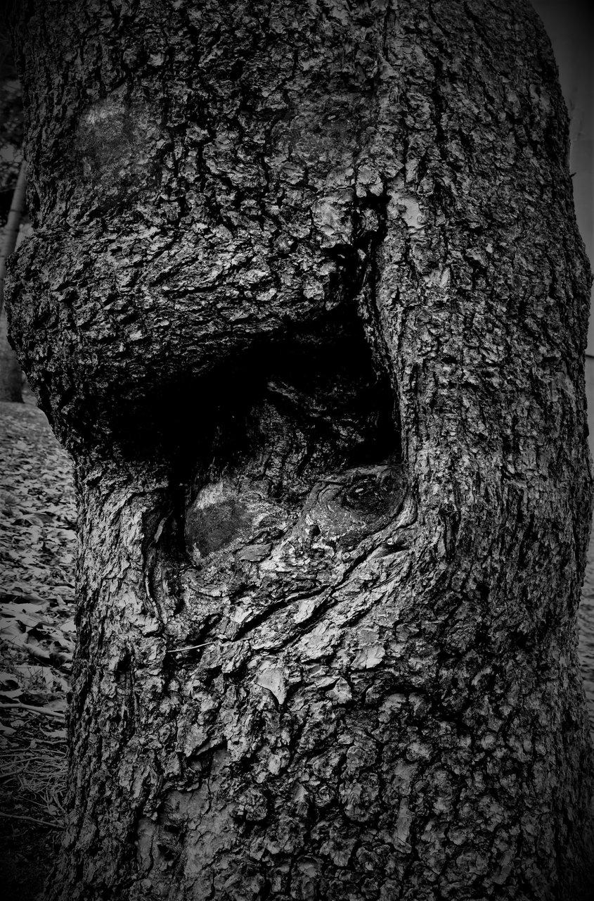 Голямата уста/The big mouth/:-) | Author Добромир Нейков - Dobnej | PHOTO FORUM