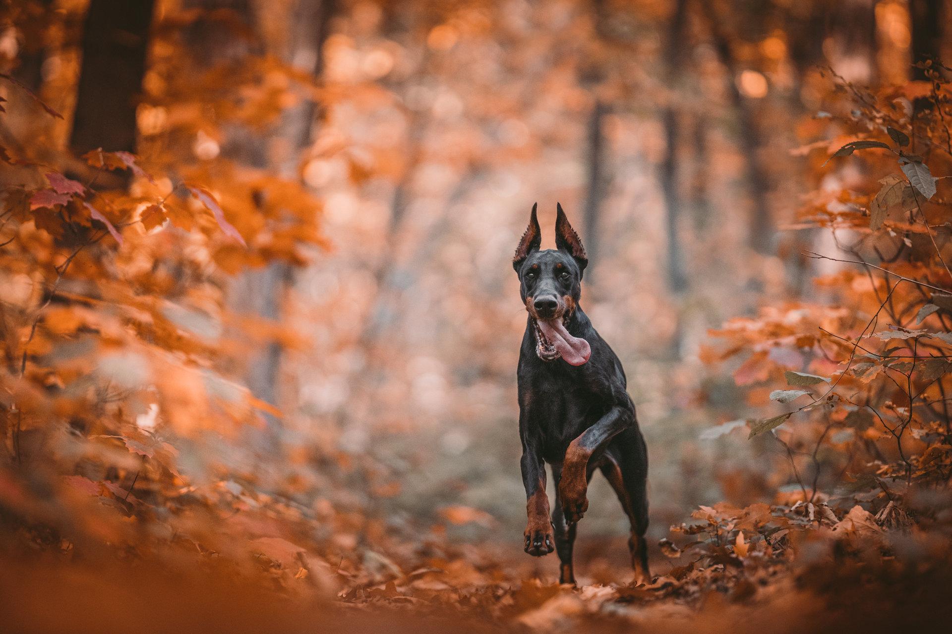 Photo in Pets   Author Александър Стоянов - alexanderrst   PHOTO FORUM