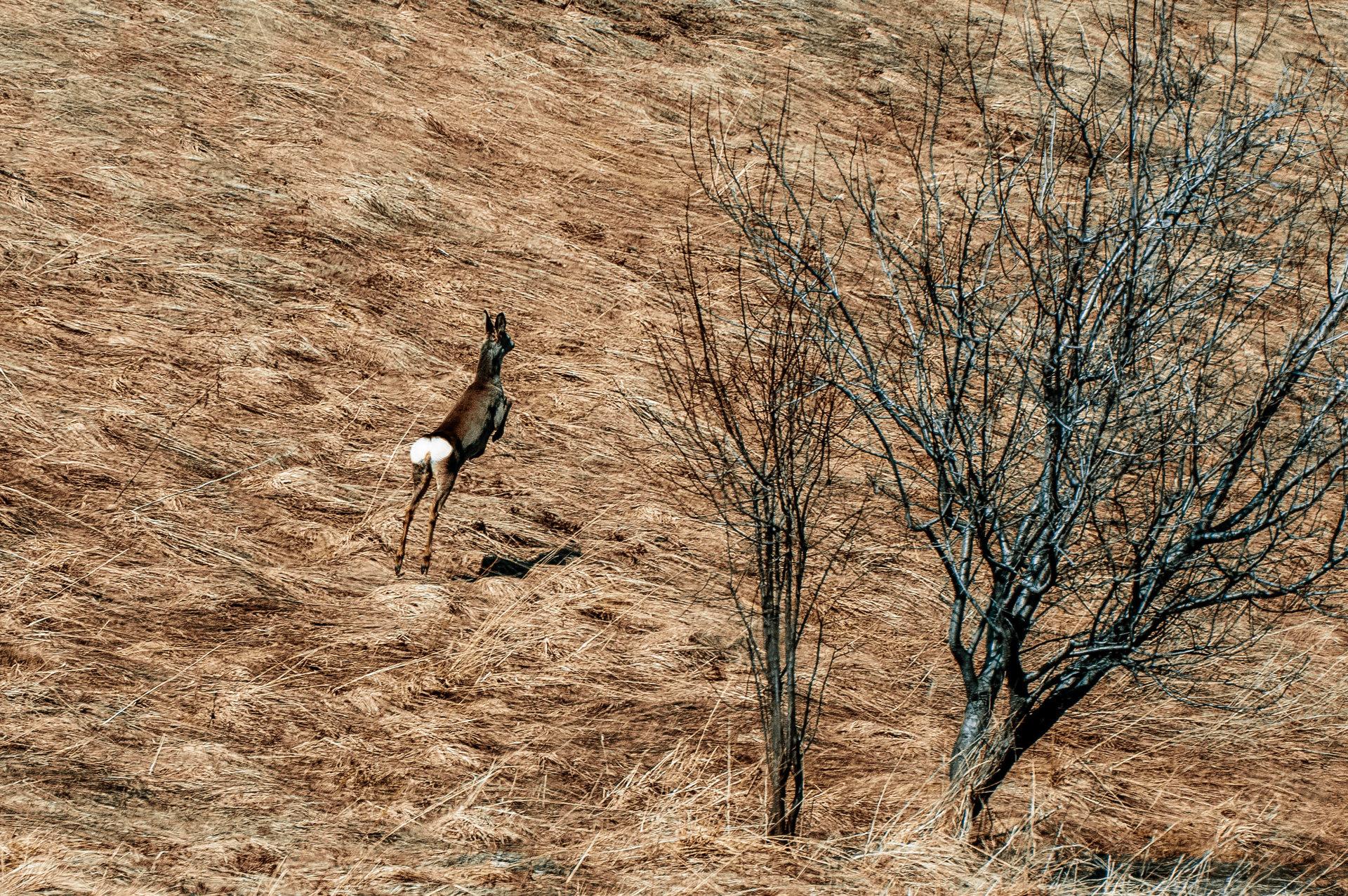 Bambi in flight | Author Dimitar Bakalov - GetBG | PHOTO FORUM
