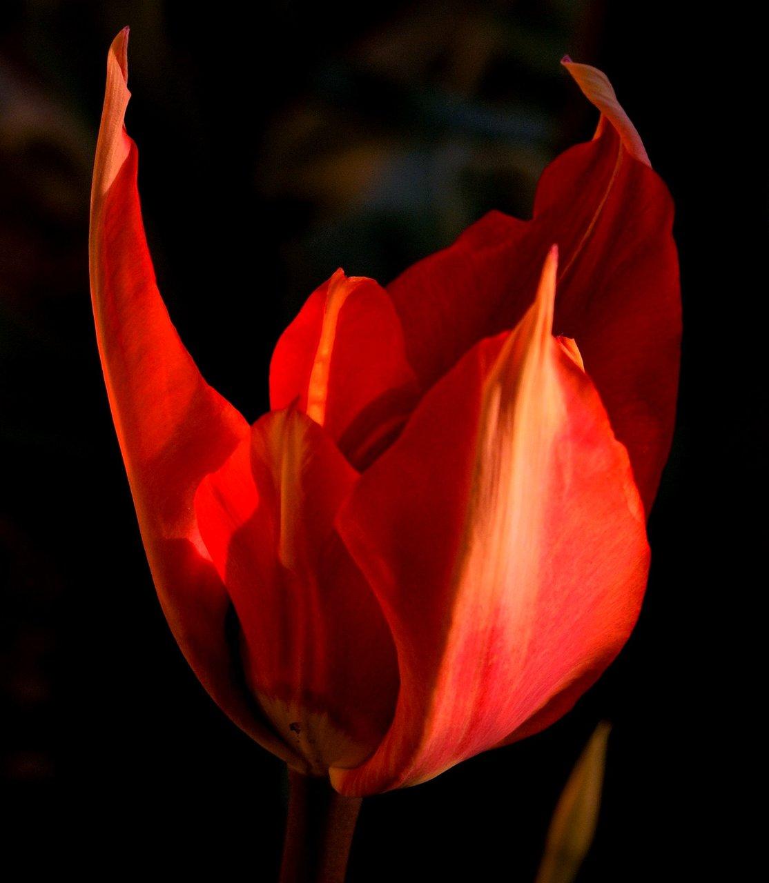 Червеното! | Author Георги Георгиев - GMG1 | PHOTO FORUM