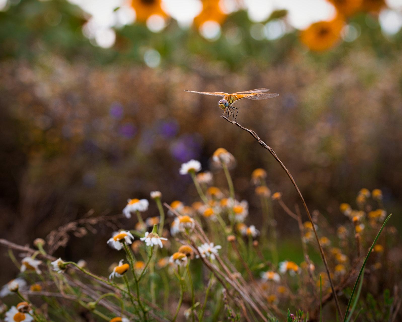 Photo in Low point of view | Author   - Barebu | PHOTO FORUM