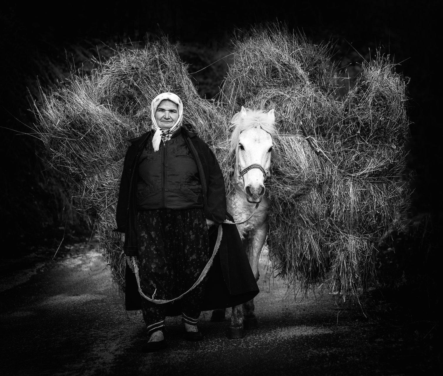 Photo in Daily round | Author Nadezhda Raycheva - sunnyhope | PHOTO FORUM
