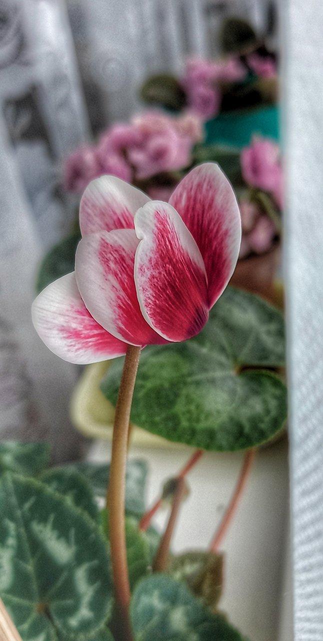 Photo in Nature | Author Diana Bojilova - Diana1969 | PHOTO FORUM