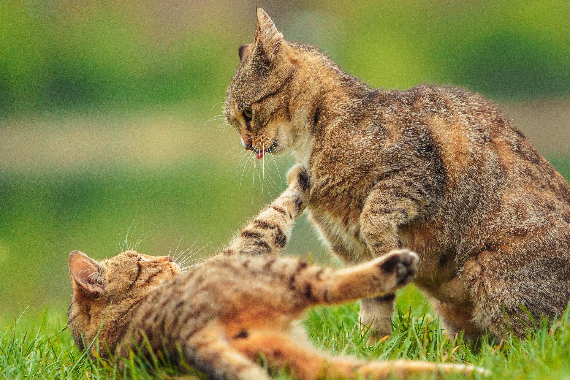 Photo in Pets | Author Anton Dimov - dimovanton | PHOTO FORUM